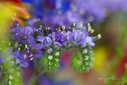 Wildflowers by Beatriz Boillat