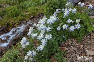 Colorado Wildflowers Photo Tour with Jeff Parker