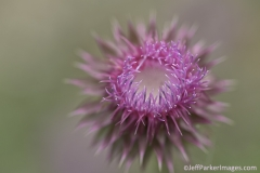 Macro photography, flower