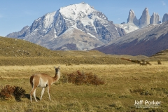 Guanaco and Patagonia Peaks, Chile
