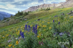 Purple and yellow flowers on a mountainside
