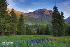 Mountain and wildflower field landscape