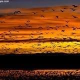 Sunrise at Bosque del Apache NWR