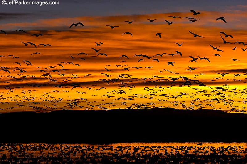 Sunrise at Bosque del Apache NWR