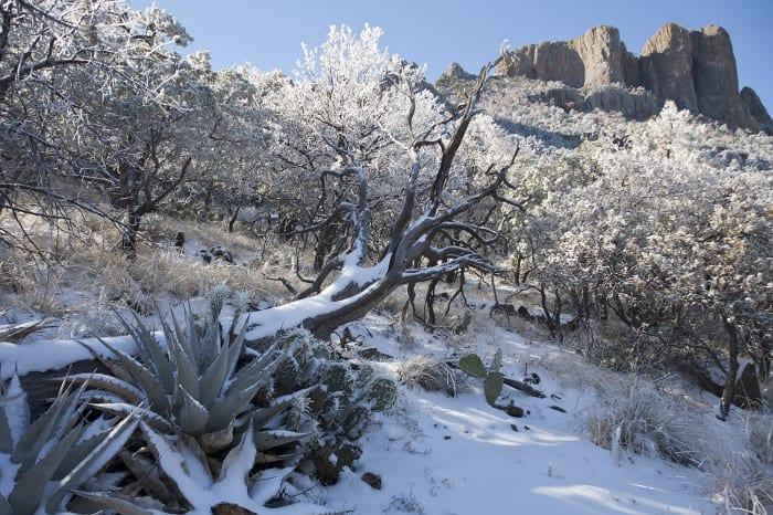 7 Tips for Snow Photography, by Jeff Parker