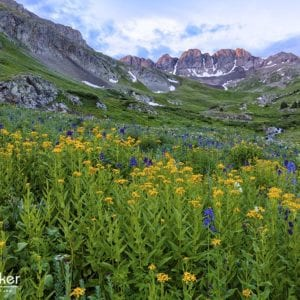 Join Jeff Parker for his Colorado Wildflowers Photo Tour 2018