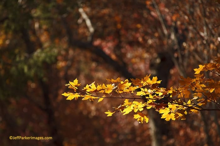 Photographing Fall Landscapes