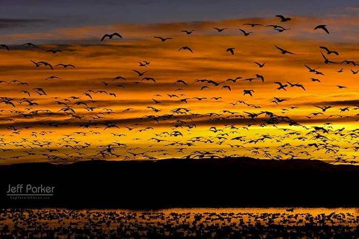 Bosque del Apache Photo Tour with Jeff Parker