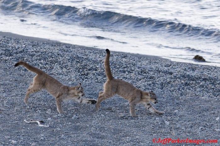 Puma Photo Tour