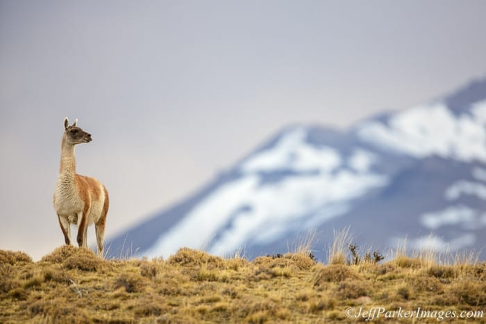 Pumas & Peaks in Patagonia Photo Tour with Jeff Parker
