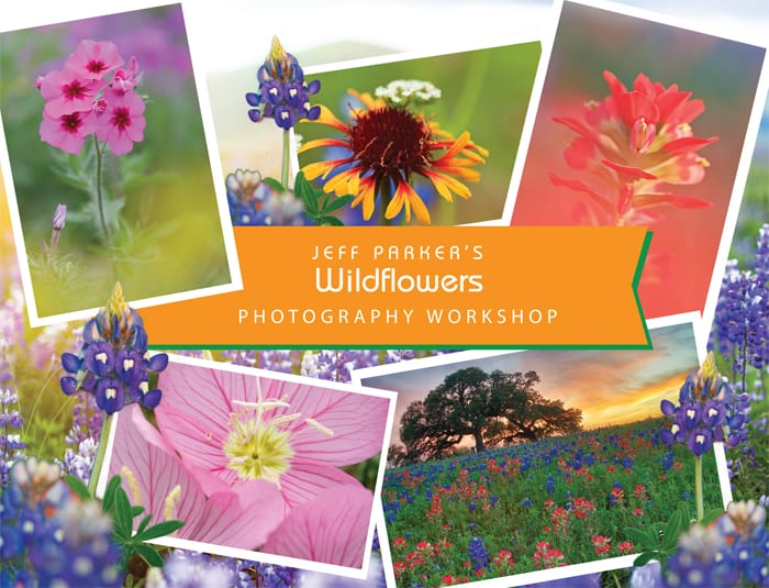 This one-day Texas Wildflowers Photography Workshop with Jeff Parker will help you get your best images of the Lone Star's beautiful spring bloomers, including bluebonnets.