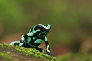 Photograph the frog of Costa Rica on this photo tour