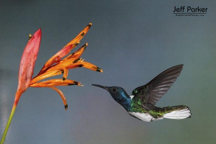 Costa Rica Photo Tour