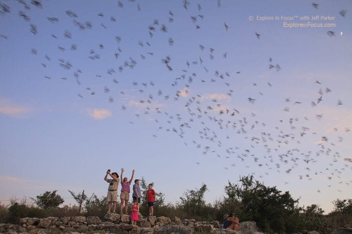 Bat Viewing in Texas at Frio Bat Flight