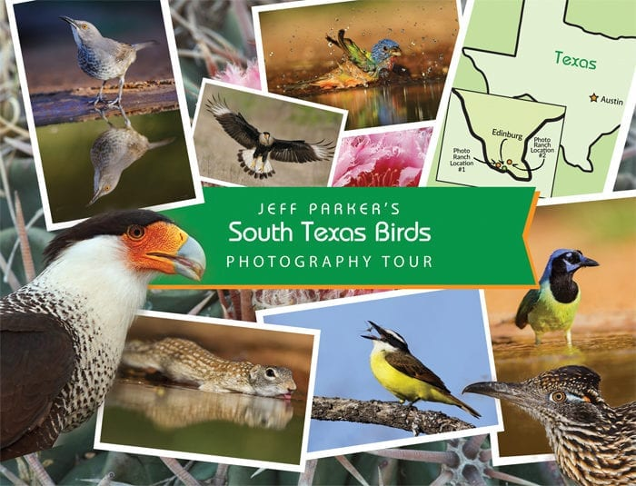 For frame-filling photos & smooth, clean backgrounds the photo ranches of South Texas are how you do it! During Jeff Parker's South Texas Birds Photo Tour ~ 2019!