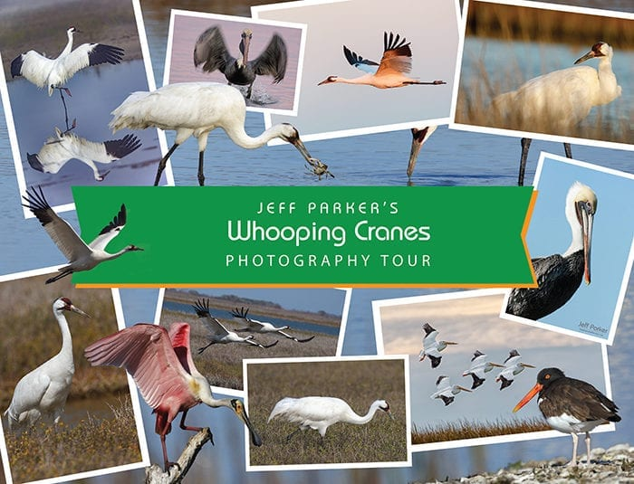 Join Jeff Parker for his Whooping Crane Photo Tour 2019