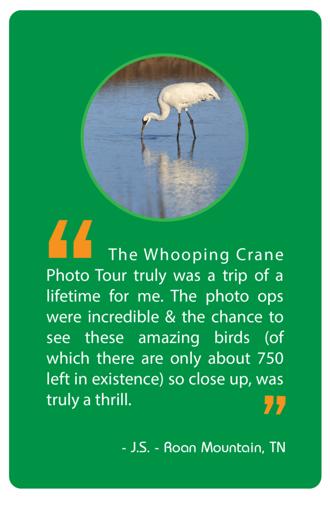 Photograph endangered Whooping Cranes at the Texas Gulf with Jeff Parker
