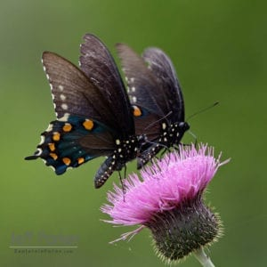 Nature Photography classes in Texas