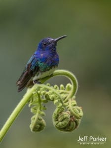 Winged Wonders of Ecuador Photo Tour with Jeff Parker