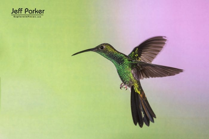 Ecuador Hummingbirds and More Photo Tour with Jeff Parker