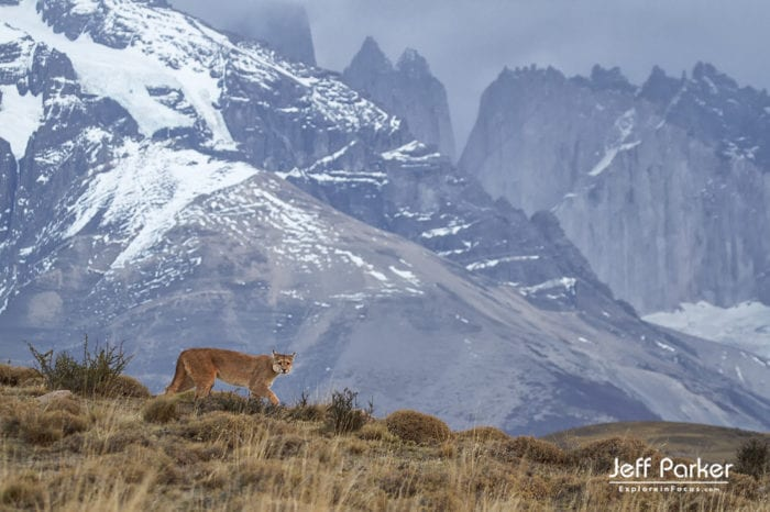 PPhotograph the winter landscapes and the wild pumas of Patagonia with Jeff Parker during his Winter Pumas and Peaks of Patagonia Photo Tour 2021.