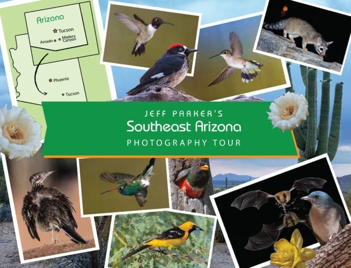 This all-inclusive, 5-night SE Arizona Photo Tour offers loads of action for your lenses, including birds you'll find nowhere else in the United States. Overall, Southeastern Arizona boasts nearly 250 avian species.