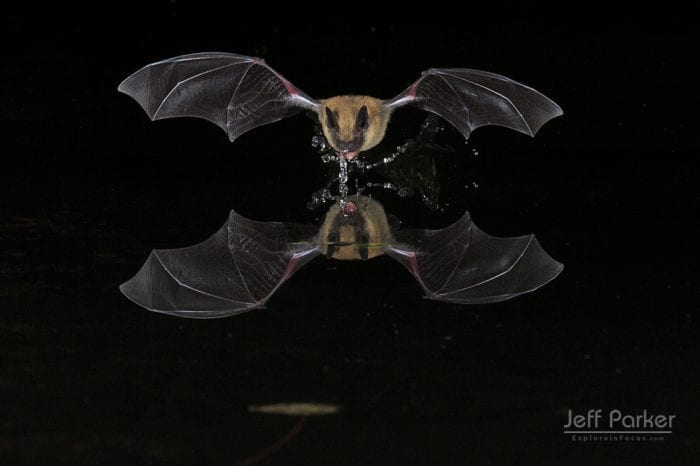 Explore in Focus in Southeastern Arizona with Jeff Parker during this photo tour and photograph bats.