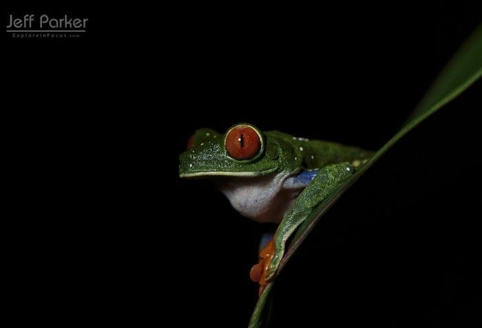 Costa Rica Photo Tour with Jeff Parker, Explore in Focus™