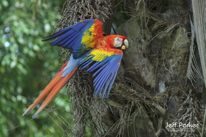 Costa Rica in Focus Photo Tour with Jeff Parker