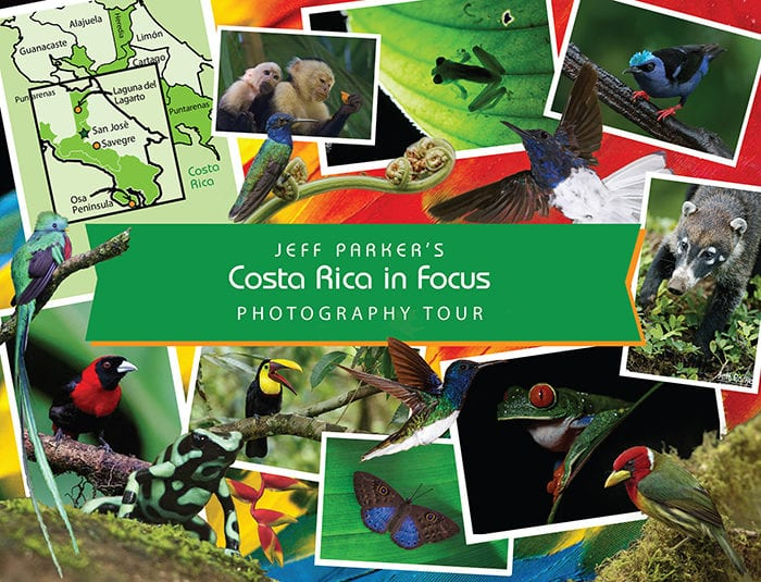 Explore & photograph three (3) unique ecosystems -- Osa Peninsula, cloud forest & rainforest -- during this wildlife-packed all-inclusive Costa Rica in Focus Photo Tour ~ 2019.