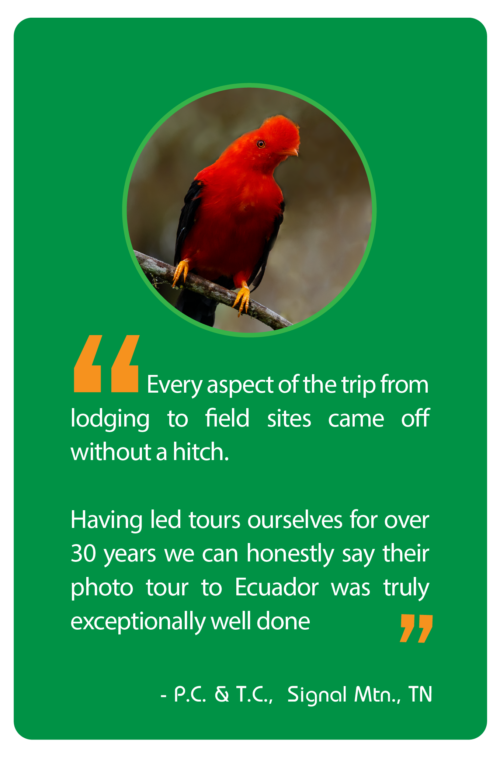 Photograph the Cock of the Rock during this photography workshop and photo tour in Ecuador