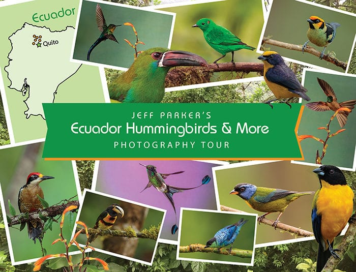 During this Ecuador Hummingbirds and More Photo Tour 2021 we'll focus on the winged wildlife of this biodiverse nation.