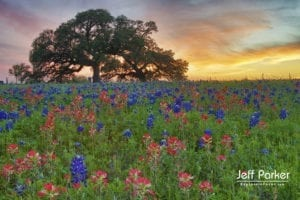 Purchase canvas wall art from award-winning nature photographer, Jeff Parker