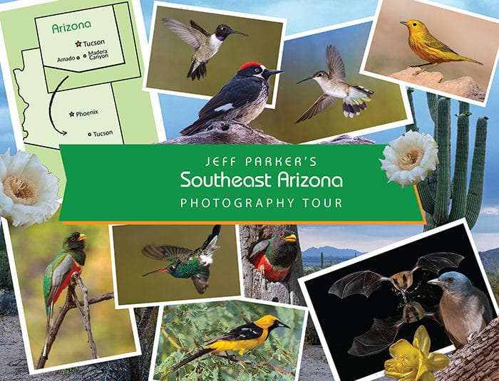 This Birds and Bats of SE Arizona Photo Tour 2021 offers the chance to photograph birds you won't find elsewhere in the United States.