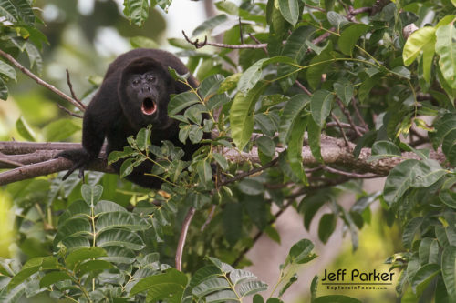 Costa Rica Photo Tour with Jeff Parker