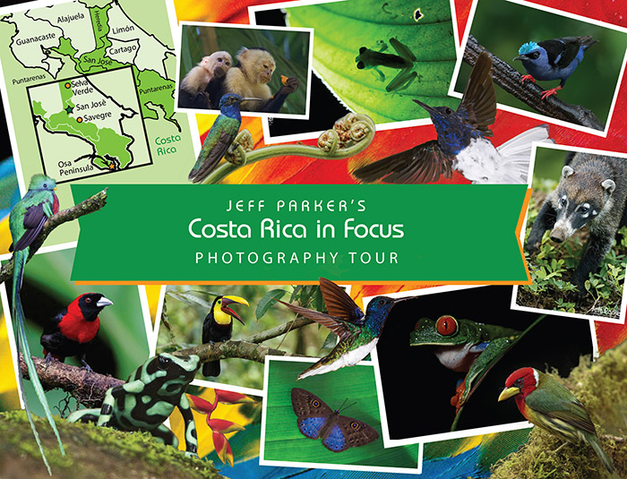 This Costa Rica Photo Tour 2021 is limited to SIX (6). Explore & photograph three (3) unique ecosystems. Costa Rica Wildlife Photo Tour in 2021 with Jeff Parker