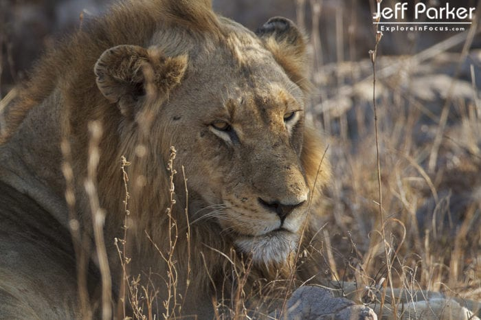 This Botswana Wildlife Photo Tour ~ 2020 will includes photography at the <a href=