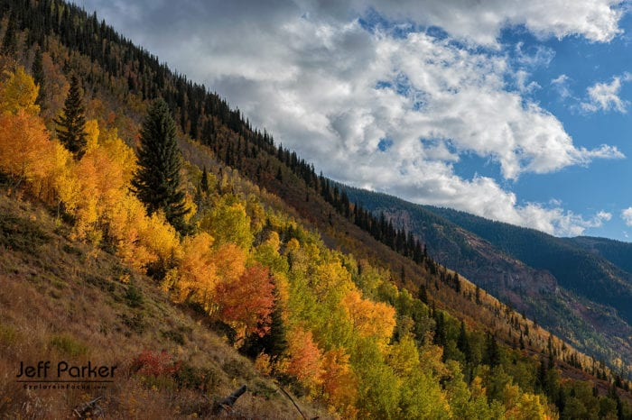 Colorado Aspen in Autumn Photo Tour with Jeff Parker, Explore in Focus