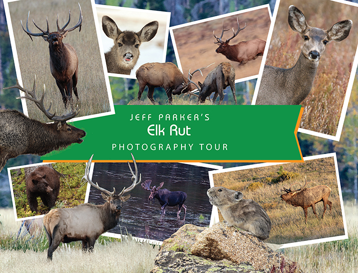 If you have never experienced the piercing scream of a bull during the rut, you're in for a treat during this ELK RUT Photo Tour 2020!