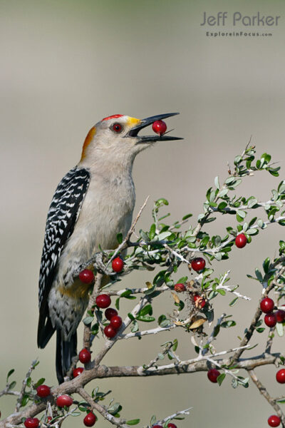 Backyard Birds Photography Workshop in Texas
