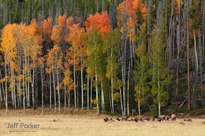 Rocky Mountain Elk Rut Photo Tour with Jeff Parker, Explore in Focus