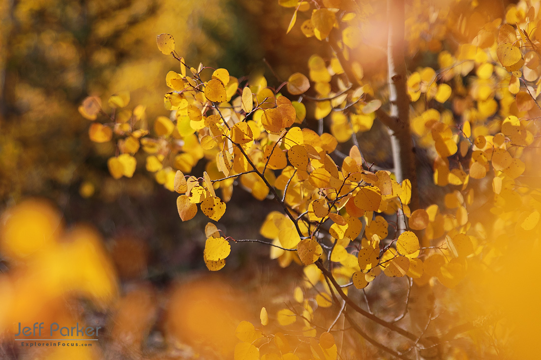 This Colorado Aspen Photo Tour focuses on capturing beautiful landscape images of the stunning fall color in the San Juan Mountains.