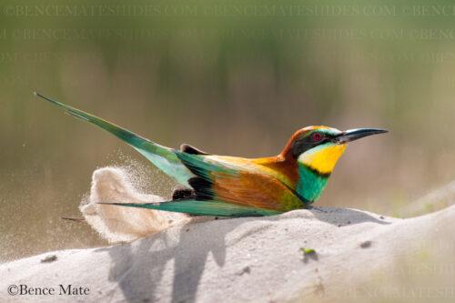 Hungary Birds and Wildlife Photo Tour with Jeff Parker 2022