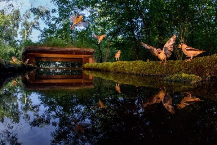 Hungary Birds & Wildlife Photo Tour 2022 with Jeff Parker