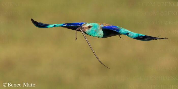 Hungary Birds and Wildlife Photo Tour 2022