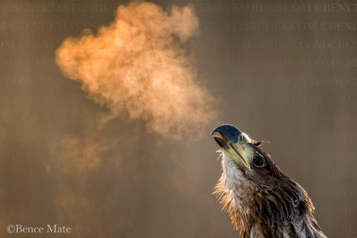 Hungary Birds and Wildlife Photo Tour 2022 with Jeff Parker